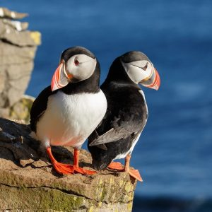 Puffin Restoration: An Inspirational Eco Story